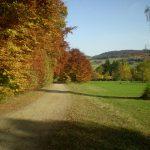Herbst-(6)