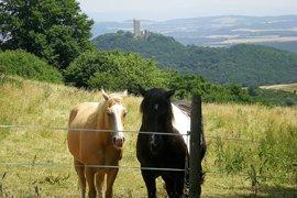 pferde-burg-olbrueck