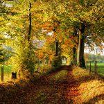 herbst_bockshahn_fotolia_125232156